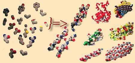 Что такое белки и как они устроены?